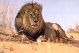 Что нужно ребенку, родившемуся под лунным знаком льва, чтобы чувствовать спокойствие и уверенность лев