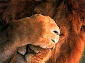 Как реагирует на окружение ребенок, родившийся под лунным знаком льва под лунным знаком льва